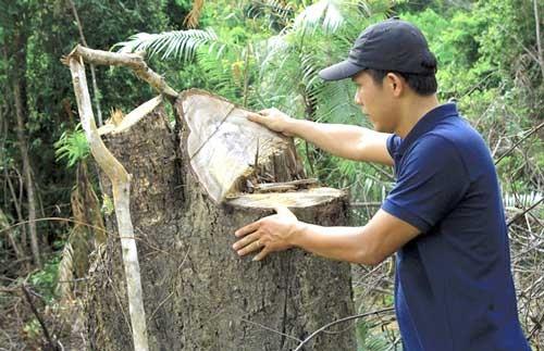Tàn sát gần 40 ha rừng phòng hộ ảnh 1