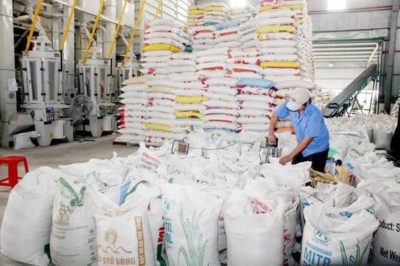 Xuất khẩu năm nay sẽ dưới 6 triệu tấn ảnh 1