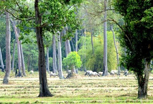 Nghiêm túc đóng cửa rừng tự nhiên ảnh 1