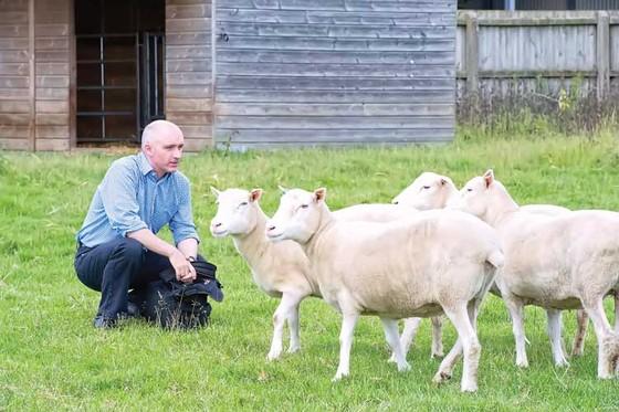 Phiên bản cừu Dolly khích lệ y học tái tạo ảnh 1