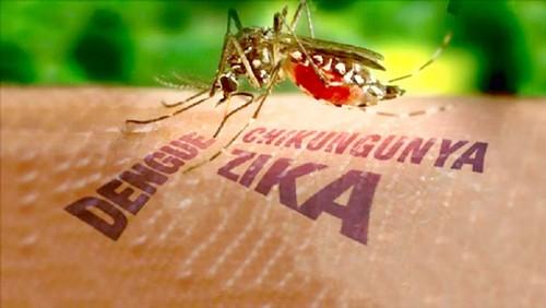 TPHCM lập 6 đoàn kiểm tra phòng chống dịch do virus Zika ảnh 1