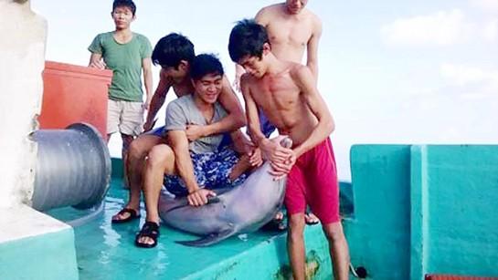 Nghi ngờ cá heo bị sát hại ở vùng biển Phú Quốc ảnh 1