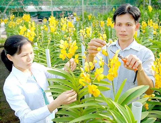 Tạo cú hích phát triển nông nghiệp đô thị ảnh 1