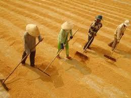 Xét bỏ Quy hoạch thương nhân kinh doanh xuất khẩu gạo ảnh 1