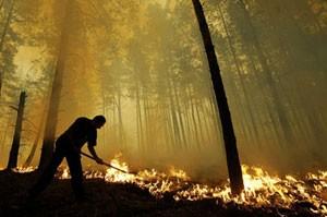 Diện tích cháy rừng tại Nga tăng mạnh ảnh 1
