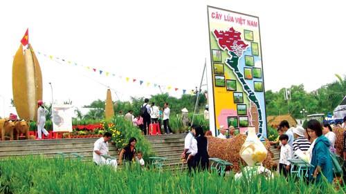 Bãi Xàu trong Lễ hội gạo quốc gia ảnh 1