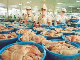 Cá tra VN: 95% thị phần cá thịt trắng thế giới ảnh 1