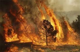 Hạn hán ở Anh, cháy rừng ở Hoa Kỳ ảnh 1