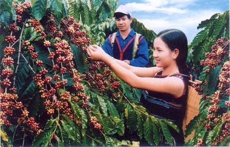 600 triệu đồng đòi lại thương hiệu cà phê BMT ảnh 1
