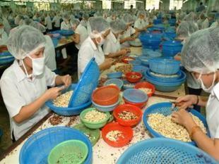 Cảnh báo việc xuất khẩu điều sang Trung Quốc ảnh 1
