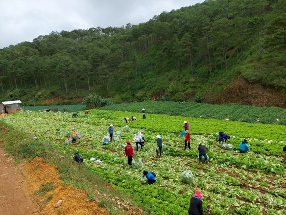 Tỉnh Lâm Đồng hỗ trợ hơn 6.000 tấn nông sản cho các tỉnh bị dịch Covid-19 ảnh 1