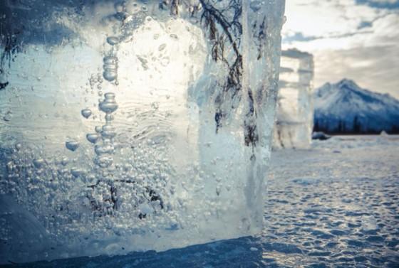 """Epson hợp tác cùng National Geographic ra mắt chiến dịch """"Turn Down the Heat""""   ảnh 3"""