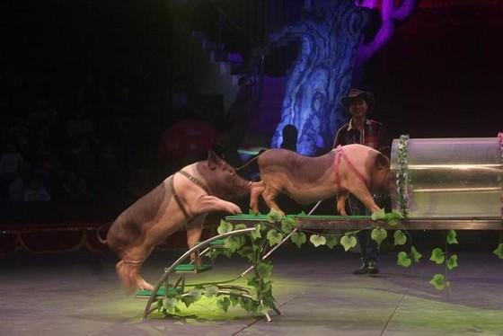 Trâu, lợn và đà điểu… sẽ thay thế động vật hoang dã trên sân khấu xiếc ảnh 2