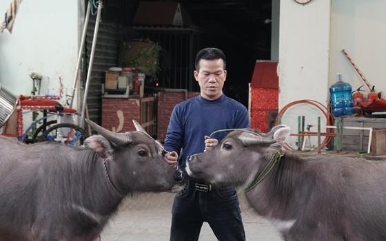 Trâu, lợn và đà điểu… sẽ thay thế động vật hoang dã trên sân khấu xiếc ảnh 1