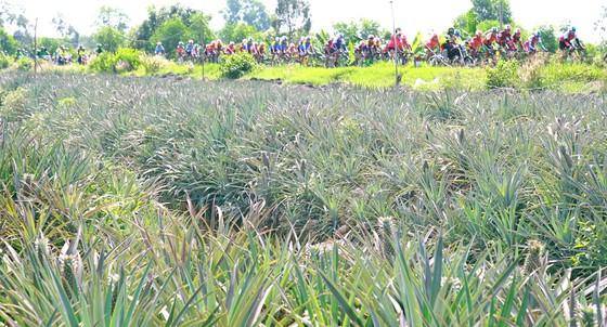 """Giải xe đạp Đồng bằng sông Cửu Long có nguy cơ bị """"xóa sổ"""" ảnh 1"""