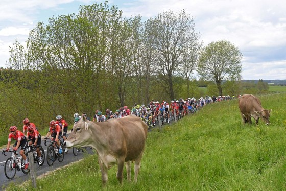 Áo vàng Brent Van Moer níu chân Chris Froome ở giải xe đạp Critérium du Dauphiné 2021 ảnh 1