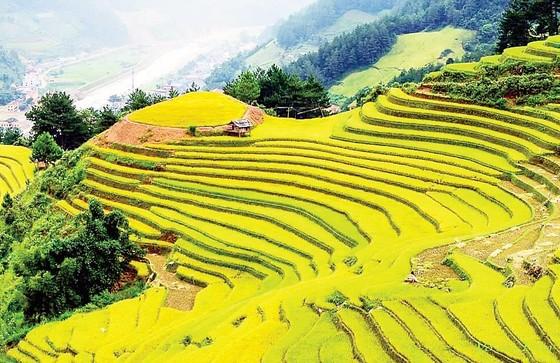 Du lịch Đông Tây Bắc, săn mùa vàng lúa chín ảnh 1