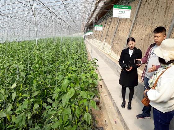 Thận trọng với tour học tập nông nghiệp nước ngoài ảnh 1
