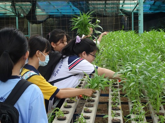 """Học sinh hào hứng trải nghiệm trồng rau, chăm sóc thú qua Cuộc thi """"Văn hay chữ tốt"""" do quận Tân Bình tổ chức  ảnh 5"""