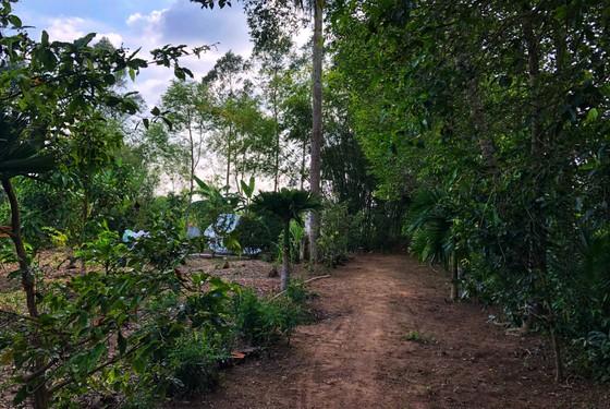 Người dân Lai Vung dọn đường sá đón ông Bảy trở về ảnh 8