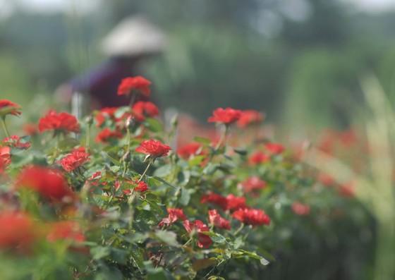 Để làng hoa Sa Đéc khoe sắc 4 mùa ảnh 10