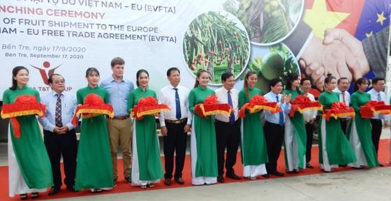 Xuất khẩu lô hàng trái cây đầu tiên sang châu Âu theo Hiệp định EVFTA ảnh 1