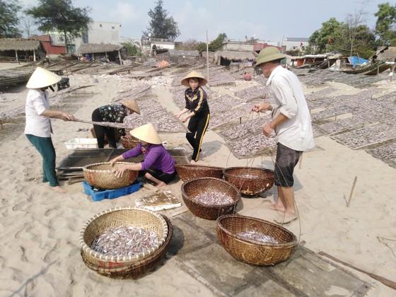 Đầu năm, ngư dân trúng mùa cá cơm ảnh 3
