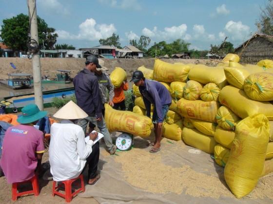 Nâng cao hiệu quả sản xuất lúa cho 8 tỉnh ĐBSCL ảnh 4