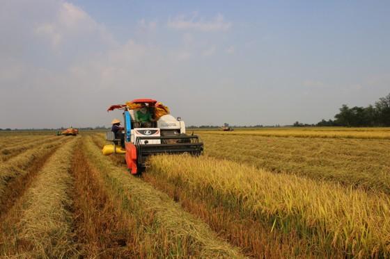 Nâng cao hiệu quả sản xuất lúa cho 8 tỉnh ĐBSCL ảnh 1