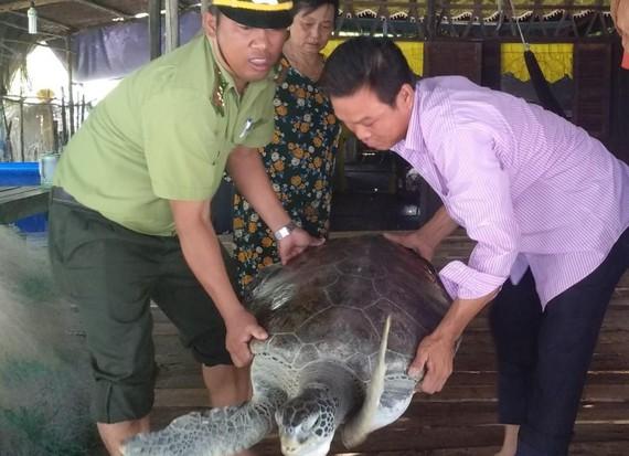Hạt kiểm lâm huyện Ngọc Hiển tiếp nhận cá thể rùa do anh Nghĩa bàn giao để thả về môi trường tự nhiên