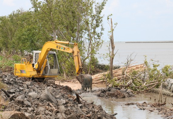 Xử lý sạt lở bảo vệ đai rừng phòng hộ đê biển Tây