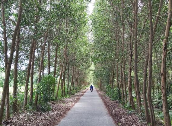 Một con đường trên địa bàn xã Khánh Thuận nằm trong lâm phần U Minh Hạ