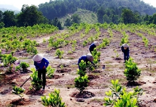 Thu hút mọi nguồn lực để trồng thành công một tỷ cây xanh