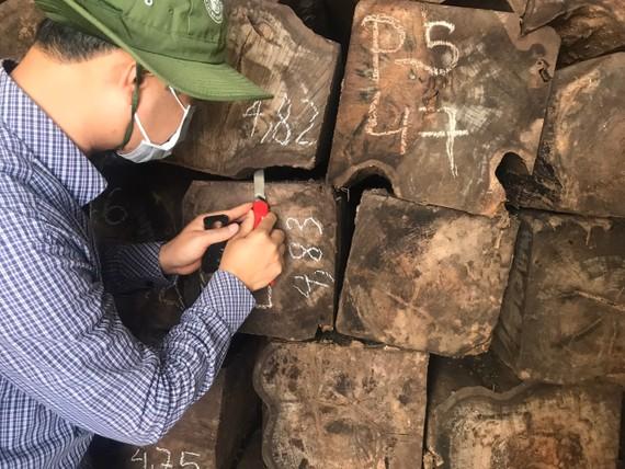 Số gỗ bị cơ quan chức năng kiểm tra, phát hiện