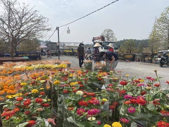 Hoa tết ở Đồng Nai tiêu thụ chậm