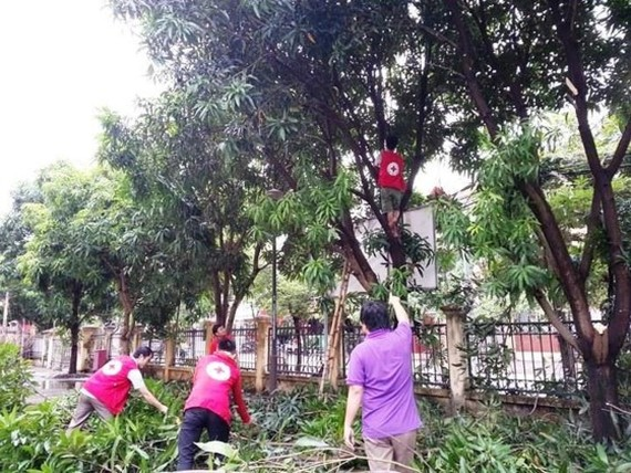 Volunteers in Quang Binh Province cut trees in preparation for the storm (Photo: SGGP)