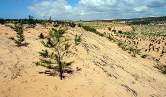 'Dead land' replaced with greenery in Binh Thuan