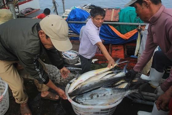 Central fishermen enjoy bumper Talang queen fish catch