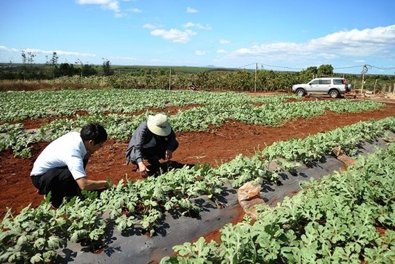 8 kilograms of watermelon seeds exported to Japan