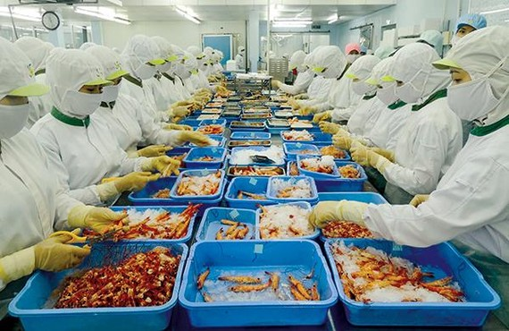 Workers process shrimp at Tra Noc 2 Industrial Park in the city of Can Tho. — Photo baocantho.com.vn