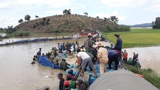 Dyke breaches, farmers rush to save rice paddies