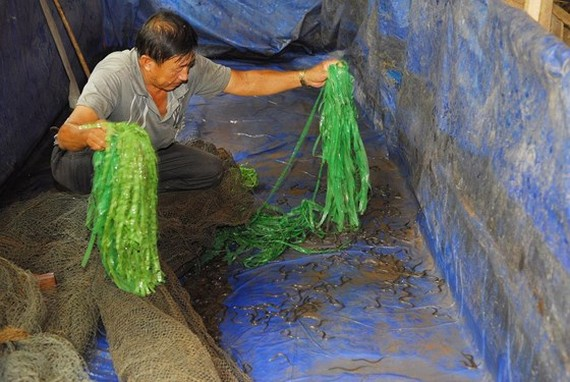 Mud-free eel breeding becomes commercial success amid African Swine Fever