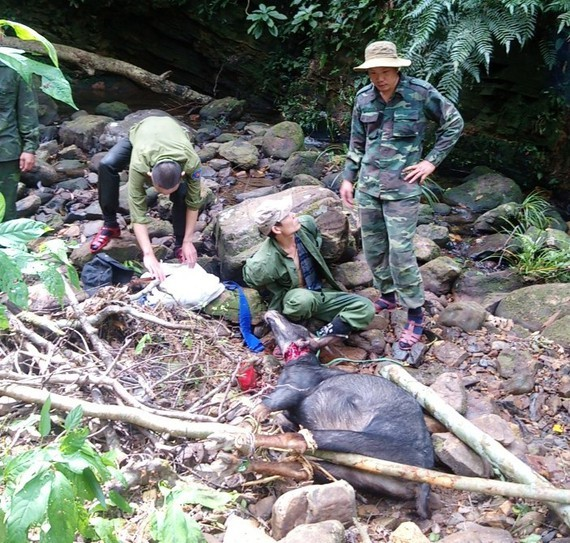 The illegal hunter is arrested (Photo: SGGP)