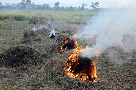 Farmers burning rice crop remnants after the harvest, one of major causes to air pollution (Photo: SGGP)