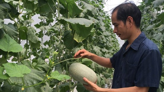 Poor farmers have been capitalized with US$151,443 in the first nine months of the year, (Photo: SGGP)