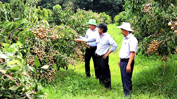 Southeastern provinces take heed of brand building for agricultural products