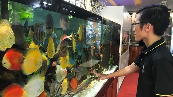 High potential of ornamental fish export