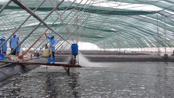 A high-tech shrimp breeding zone in Bac Lieu