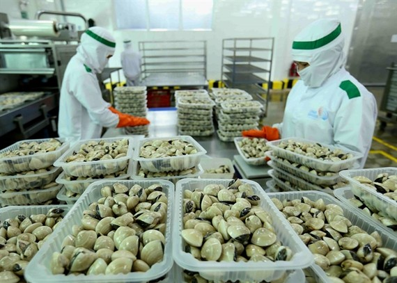 The Lenger Vietnam Seafood Company has processed clams for the domestic market and export, including to the EU. The EVFTA opens a great opportunity for Vietnam to ship more goods to the EU market. — VNA/VNS Photo