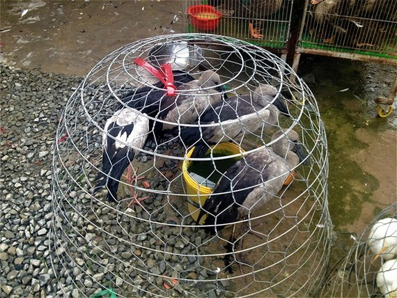 Vietnam takes heed of A/H5N1 prevention